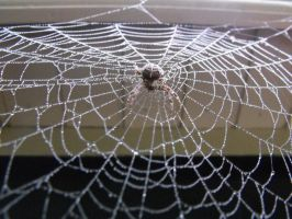 Spider on her web by Trea1969