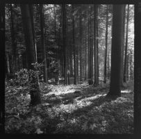 black forest in black and white - 1 by VooDooMania