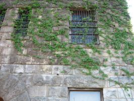 Old Jail - Vines 1 by stock-by-silver