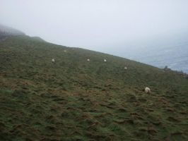 Sheep on the Hillside. by FrostatMidnight