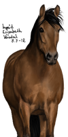 Warmblood mare by imsdaler