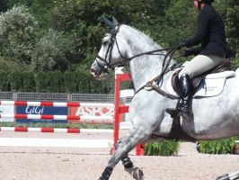 Show Jumper horse stock by WistfulDesigns