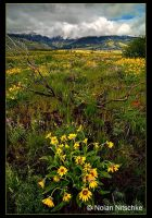 Idaho Wildflowers by narmansk8