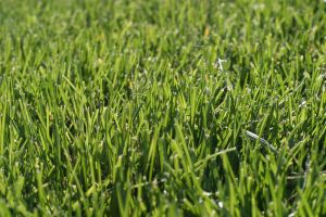Grass 3 by fl8us-stock