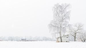 Winterwalk 2013 Wallpaper 16:9 12 by aradilon