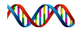 Commision for DNA Projecten BV Version 2.1 (LOGO) by bastiaandegoede