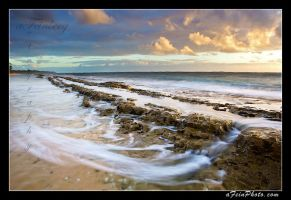 Bending With The Tide by aFeinPhoto-com