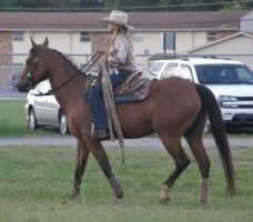 quarter horse 04 by JuneButterfly-stock