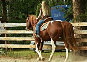 Chestnut Tobiano Paint Horse by EquineGhost