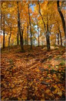 Autumn ..131.. by my-shots