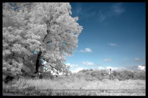 Old Edmonton School IR 4 by GothicAmethyst