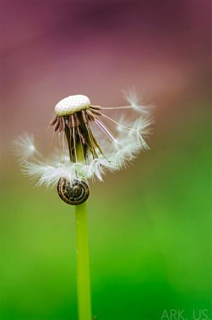 Dandelion and snail by Arkus83