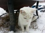 Cat's first snow by vinter-stjarna