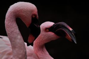 Two Pink Amigos by xsiorcanna