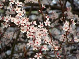 New blossoms by Santian69