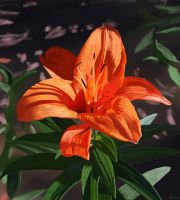 Tiger Lily by kennyc