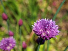 Chives 2 by techunit