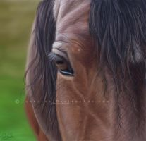 Window to my Soul by jaenalee
