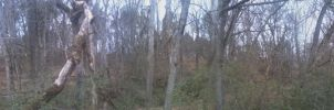 Bare Woods (Panoramic) by theconjuringmage