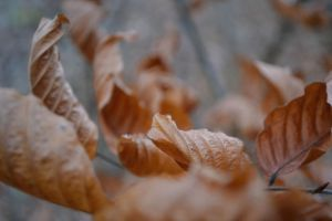 Leaves. The last moment before the fall 2 by adamwita