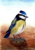 Blue Tit by MadInKaCC