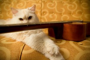 Guitar Kitty by alkimh