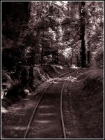 Redwood Tracks by The-Stealth-Ninja