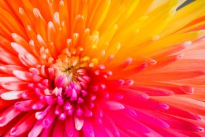Happy Chrysant Tropical by RAINBOWedROSES