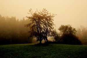 Tree in Morningsun by Silvermoonswan