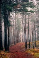 Mist in the Forest V by NorthernLand