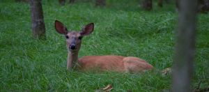 Doe by EarthBerry