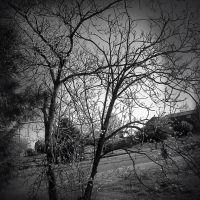 Tree Outside of Window black and white by Photoblissforever