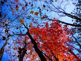 Fall Leaves by archipirata