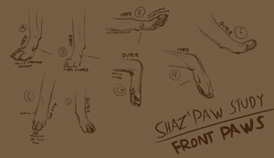 Paw Study - Front Paws by ForgottenAmnesty