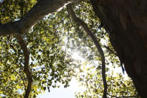 Sun Through the London Plane by AndehDulac