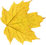 Leaf PNG 02 - Stock by Thy-Darkest-Hour