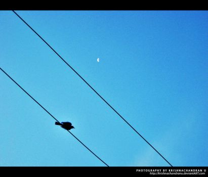 Crow and the Moon by krishnachandranu