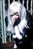 Black Cat - Marvel by Neferet-Cosplay