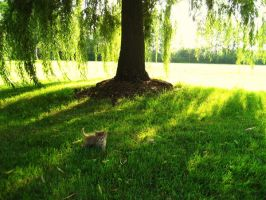 Cat in the Grass: Phlox by cha29