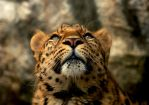 Amur Up by Shadow-and-Flame-86