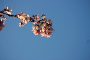 Blossoms by looking4myleopard