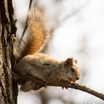 Squirrel! by JosephTimbury