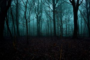 foggy forest by apfe