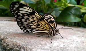 Butterfly2 by TheCuraga