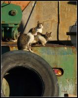 Cats in Harbour by kanes