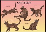 Cat Study by brownwhisker