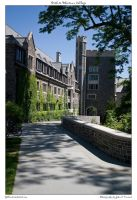 Path to Whitman College by yellowcaseartist