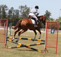 STOCK Showjumping 419 by aussiegal7