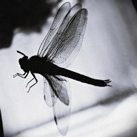 the dark tale of the dragonfly by PsycheAnamnesis