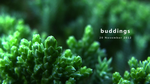 Buddings by GraphiteOnPaper
